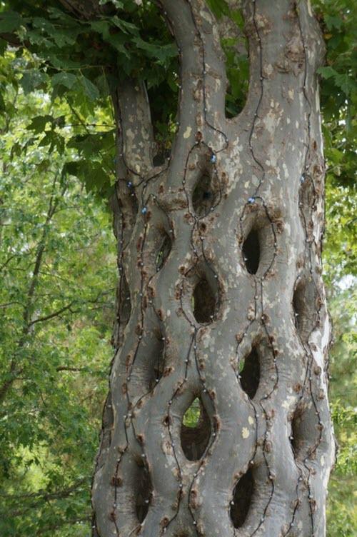 Как научить деревья расти по формам собственного дизайна