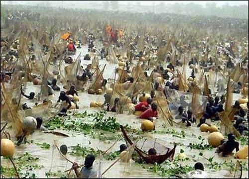 Фестиваль в Аргунгу, или рыбалка по-нигерийски
